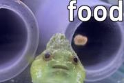 海外「案の定日本なのか…」 日本近海に生息する魚が嘘みたいな可愛さだと話題に