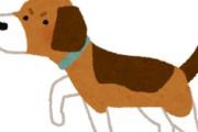 海外「なんか納得!」世界中の犬の祖先が日本に居ることが分かって海外がびっくり仰天