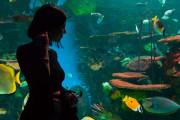 日本人「水族館に行ったらエイとコーデかぶってた」【台湾人の反応】