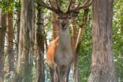 狩りをしていた11歳少年、鹿と間違われて継父に射殺される事故発生...