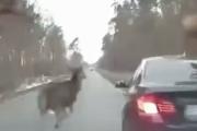 危ないよ、どいてどいてー!道路を横断する鹿が車を避けるジャンプ。海外の反応