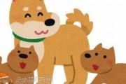 日本人「同僚の女性が、ペットの犬が子供を5匹産んだから1匹もらってくれてと言ってきたんだ、OKしたらくれたのは親犬の方だった」 中国の反応