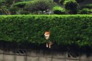 「この柴犬は茂みにハマってた」身動きが取れない動物が面白いと海外で話題www