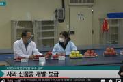 韓国「日本産を越えた国産リンゴ」