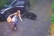 こんなところでクマさんに出会うなんて。森の中に車を止めるときはきちんとドアを閉めて。海外の反応