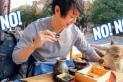 海外視聴者「ここ行った!恋しいなあ~」シカには要注意!?奈良の観光名所を巡る旅