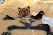 カナダ人「熊が生息している国は一流だ」日本「ヒグマがいるわ」