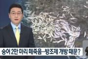 【汚物】韓国人「韓国の海岸でボラ2万匹が集団死!」貯水池防潮堤から汚水が流入か? 韓国の反応