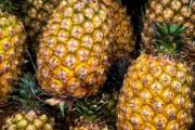 海外「中国が台湾産パイナップルに禁輸措置。日本は台湾を支持し6000トンを注文」