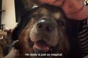 メキシコからアメリカにやってきた16歳の保護犬が新しい家族に出会うまで…