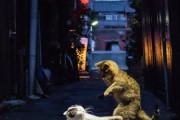 外国人「日本の路地裏で喧嘩してる猫が格闘ゲームみたいだ!」