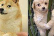 韓国人「また韓国が日本に完全敗北‥」ドージコインの柴犬に「44億円」の価値!韓国の犬は「0円」‥何故なのか? 韓国の反応