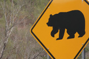 日本人男性が襲ってきた熊に投げかけた言葉に海外びっくり仰天!(海外の反応)