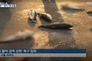 【火病】韓国「日本の輸入魚が旨すぎて韓国魚が売れない!!謝罪しろ!」日本の魚を投げつけ抗議・・・【韓国の反応】