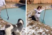 やっぱりそうなるよね…氷の張った自宅庭のプールにのってみたマダムがお決まりの展開に