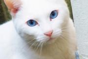 海外「日本一酷い猫の寝顔がコチラwww」横で寝ている彼女が同じ顔してるんだけど?