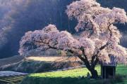 中国人「世界が驚愕する日本の8つの事実!世界最古の王室を有する、日本人は会話しなくてもコミュニケーションができる文化を持っている…」 中国の反応